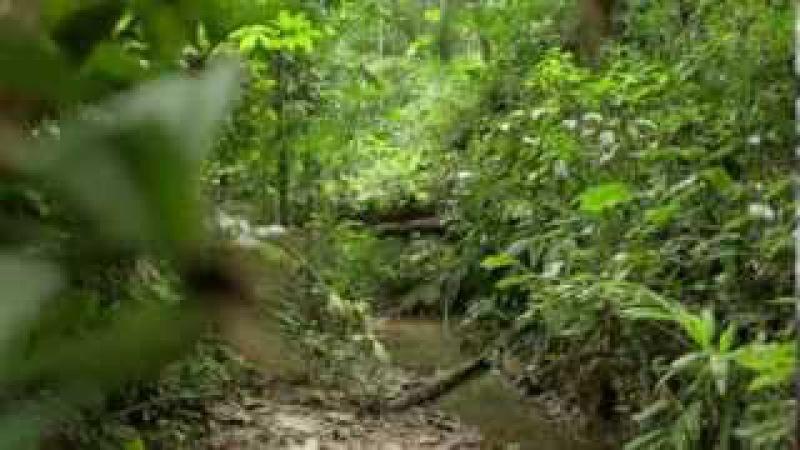 Indiens.D.Amazonie.Le.Dernier.Combat.DOC choc