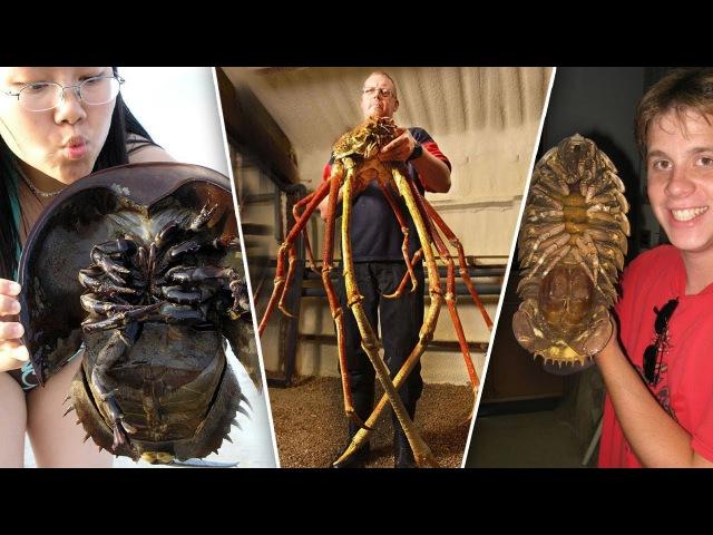 ТОП 10 самых ГИГАНТСКИХ ЖУКОВ в мире, насекомые переростки