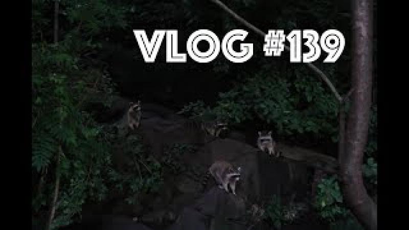 В мире животных, Гениальный влогер, Семейный влог | VLOG 139 | Жизнь в Америке 24.07.2017