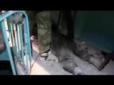 Зашквареный Моторола Video18+
