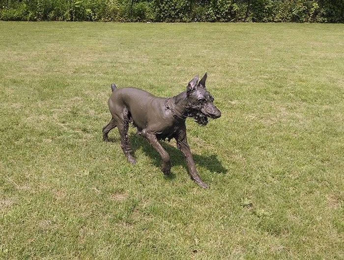 Собака-в грязи валяка - фотографии собак, которых не следовало бы спускать с поводка