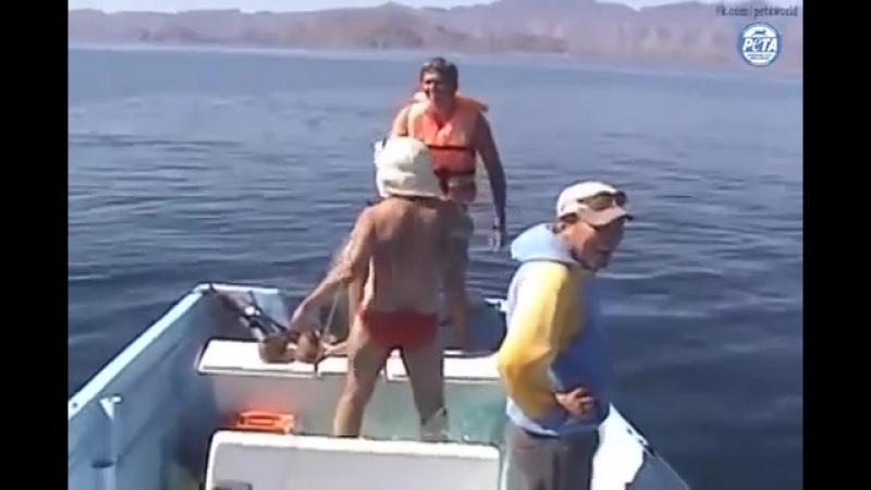 Как люди киту помогли выпутаться из сетей