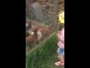 Светочка кормит курочек