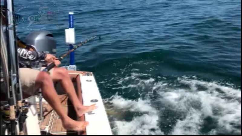 Fishing Huge Bottom Fish Sea Creature Flips Fishermans Canoe Videos
