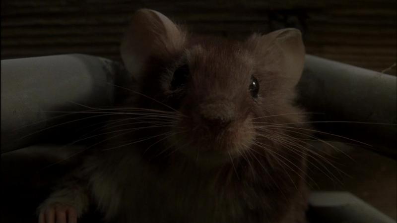 Мышиная охота - Милый мышиный дом