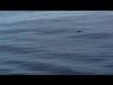 Кит. Тихий океан