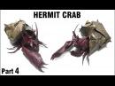 Origami Hermit Crab tutorial Satoshi Kamiya Part 4 折り紙 ヤドカリ оригами Рак Отшельник Cangrejo