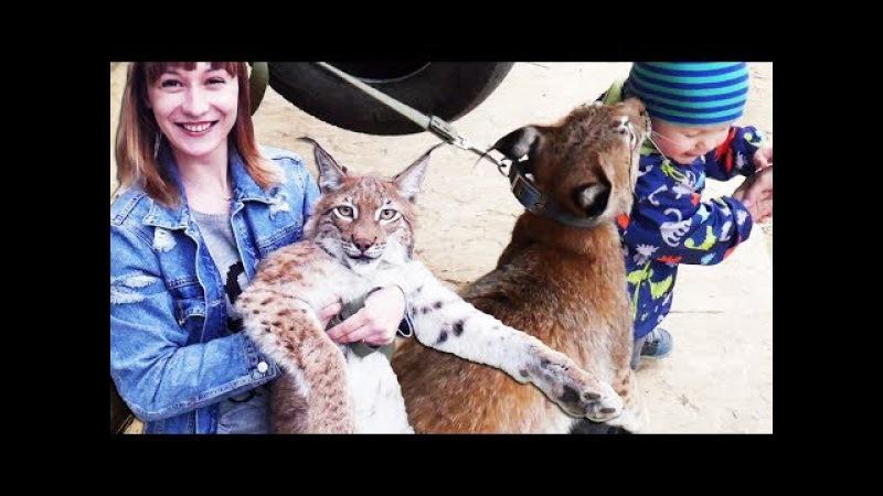 РЕАКЦИЯ ДЕТЕЙ НА РЫСЬ. Большая кошка Ханна встречается с соседями и друзьями