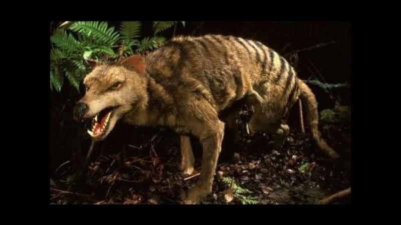 Хищники-убийцы Австралии. Дикие животные. Документальный фильм Discovery.