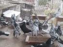 Николаевские торцовые голуби моего друга