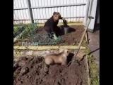 Говорят в России медведи по дорогам ходят -Да прям,некогда им шататься.картошку копают
