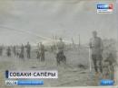 В парке Сосновка откроют памятник военным дрессировщикам и собакам Ленинградского фронта