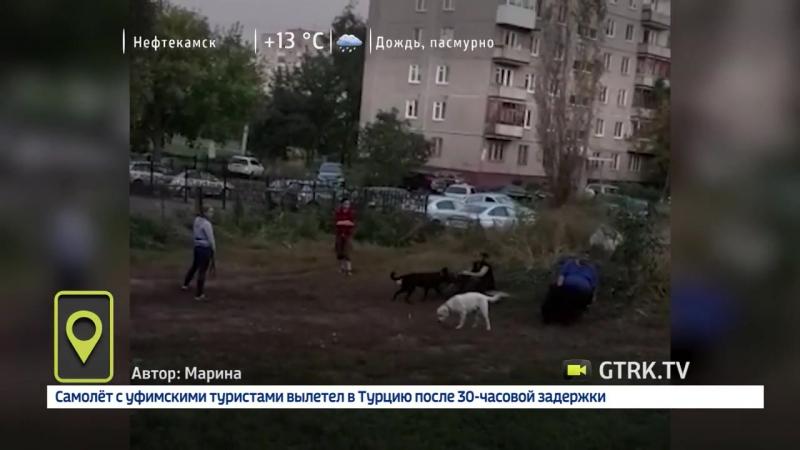Собачий беспредел в Уфе
