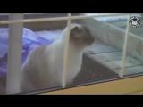Открывай, кот в дверь стучит