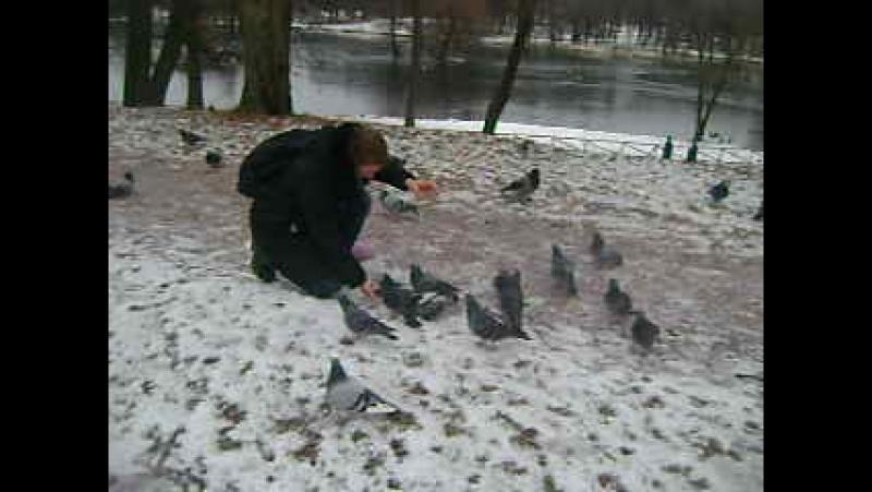 № 30 - 17 Декабря 2015 2 - Как пытаться поймать голубя