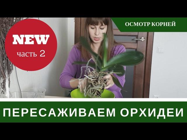 Как Пересаживать Орхидею Фаленопсис 🌸 Пересадка Орхидеи 🌸