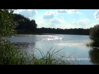 Река. Природа. Пение птиц. Звуки природы. Птицы поют. Релакс. Медитация. Место сил ...