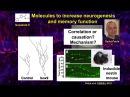 NEURON Conference 2014 - Adult Hippocampal Neurogenesis... - Amelia Eisch