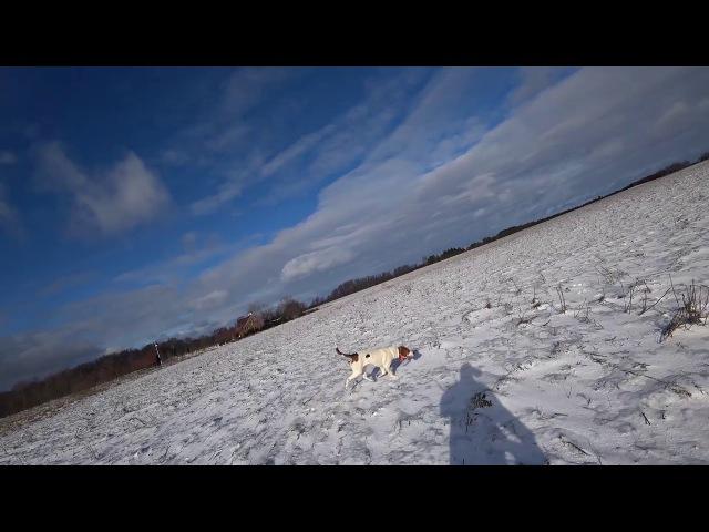 Охота 137 с гончими на зайца и лису
