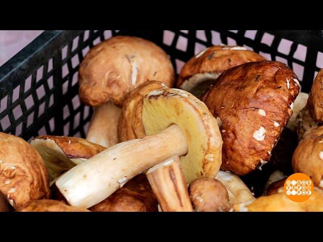 Первые грибы— первые отравления. Доброе утро. Фрагмент выпуска от17.08.2017