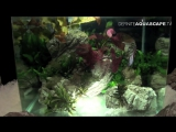 The Art of the Planted Aquarium 2015 - Scapers Tank (Nano) category, part 5