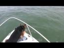 Собака так хотела подружиться с дельфинами