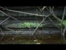 BBC В краю муссонов 1 В ожидании дождя Документальный 2014