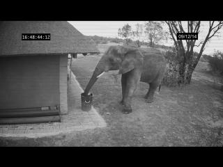 Если слон может, то почему мы не можем?
