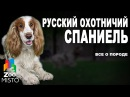 Русский охотничий спаниель - Все о породе собаки | Собака породы - Русский охотничий спаниель
