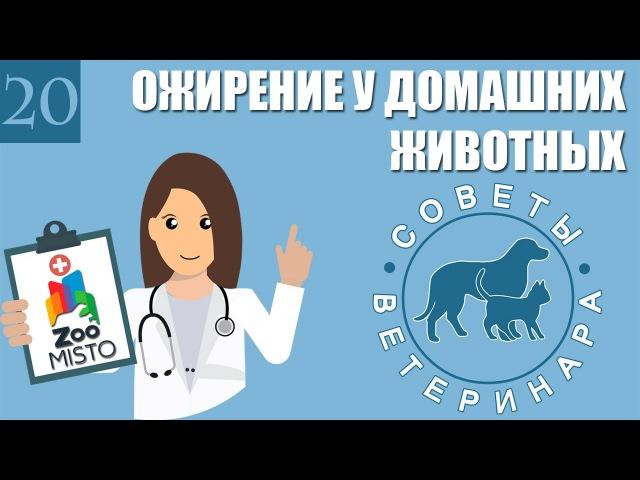 Ожирение у домашних животных. Советы ветеринара