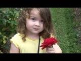 Petite Fleur - Acker Bilk