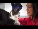 PET BRUSH GLOVE Перчатка для вычесывания шерсти животных новинка отзывы и обзоры