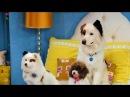 Собака точка ком (Сезон 3 Серия 18)