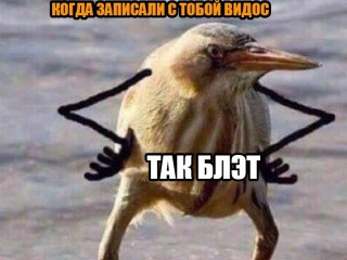 Мем Так, блэт (птица с руками)