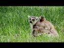 Детёныши в дикой природе 10 День в джунглях Развлекательный животные 2015