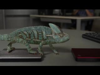 Удивительное видео! Хамелеон меняет цвет