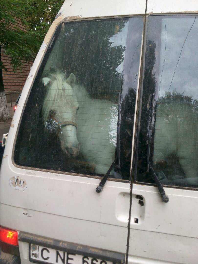 Photo of the day: A horse was transported in a Chisinau minibus