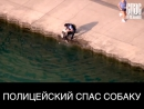 Полицейский спас собаку которая упала с пирса пытаясь попить