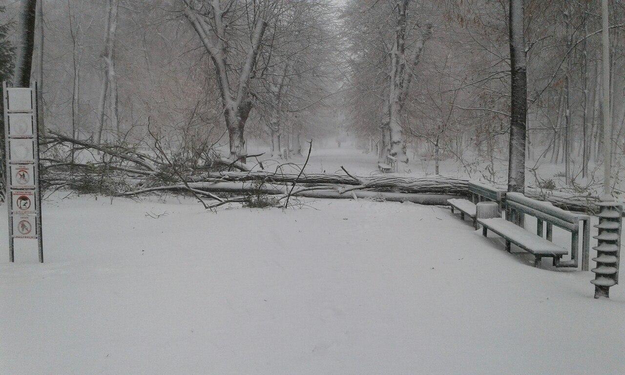 Снегопад в Украине: спасатели вытаскивают автомобили из снежных заносов и расчищают трассы, заваленные сломанными деревьями - Цензор.НЕТ 5751