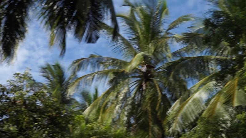 Наши Мальдивские друзья - геккончкики, рыбки, скаты, дельфины, мурены, акулы, осьминоги, птицы, хамелеон и летучие мыши