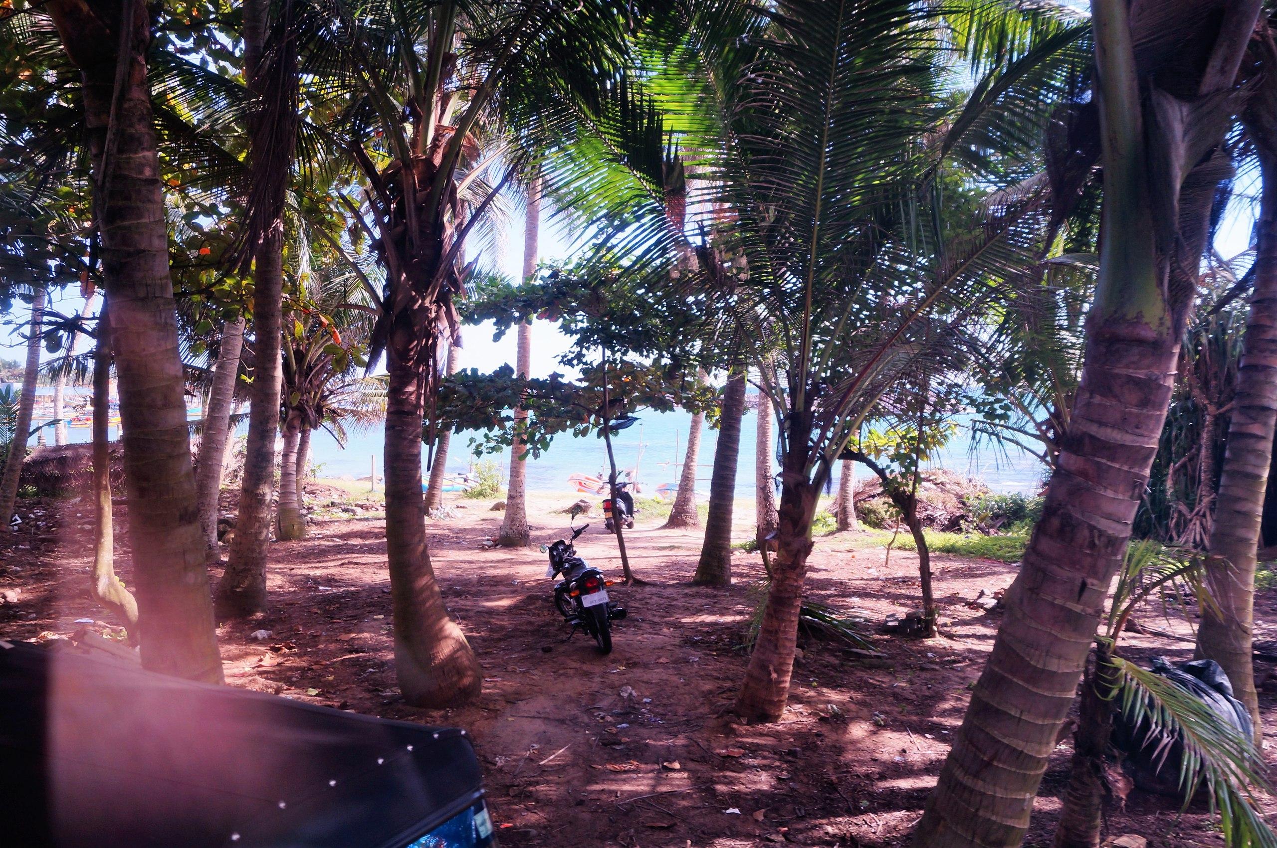 Пляж  Мириса - один из самых красивых пляжей Шри Ланки