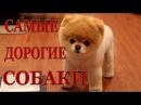 Топ 10. Самые дорогие породы собак