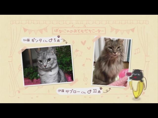 И тот и этот кот... (9й Неизвестный, Bananya, БАНАНЬКА)