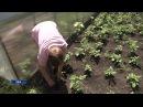 Уфимские садоводы уже не надеются собрать урожай со своих огородов