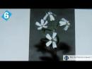 АМЕРИКАНЦЫ о РУССКИХ ! 12 удивительных фактов про Россию ! Русский перевод. Американцы о России