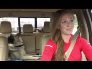Когда твоя собака любит правильную музыку