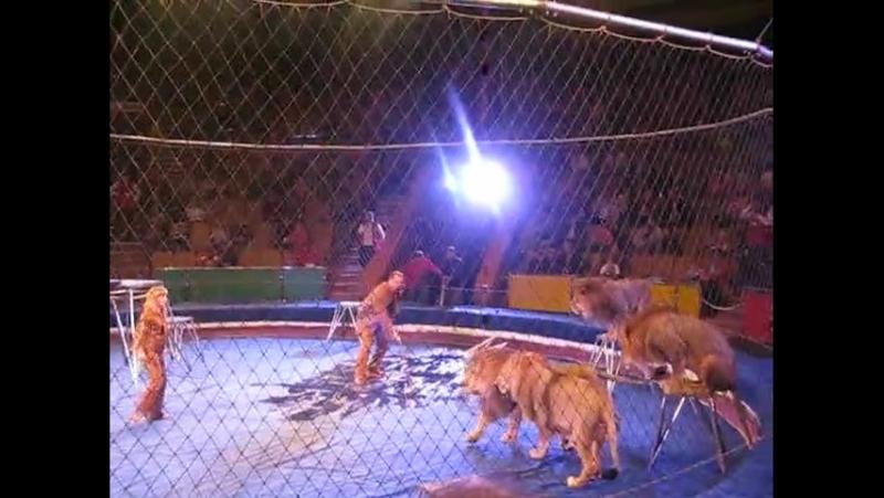 ЧП Цирка ужас львы и тигры напали на человека. Цирк в Луганске