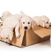 Покупка и продажа <b>животных</b>. | ВКонтакте