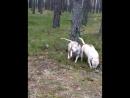 в темно синем лесу, где бескрайние лужи)) дочки-матери блин...