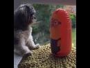 Собачьи бои прислужник из Гадкий я. это эпическая битва!